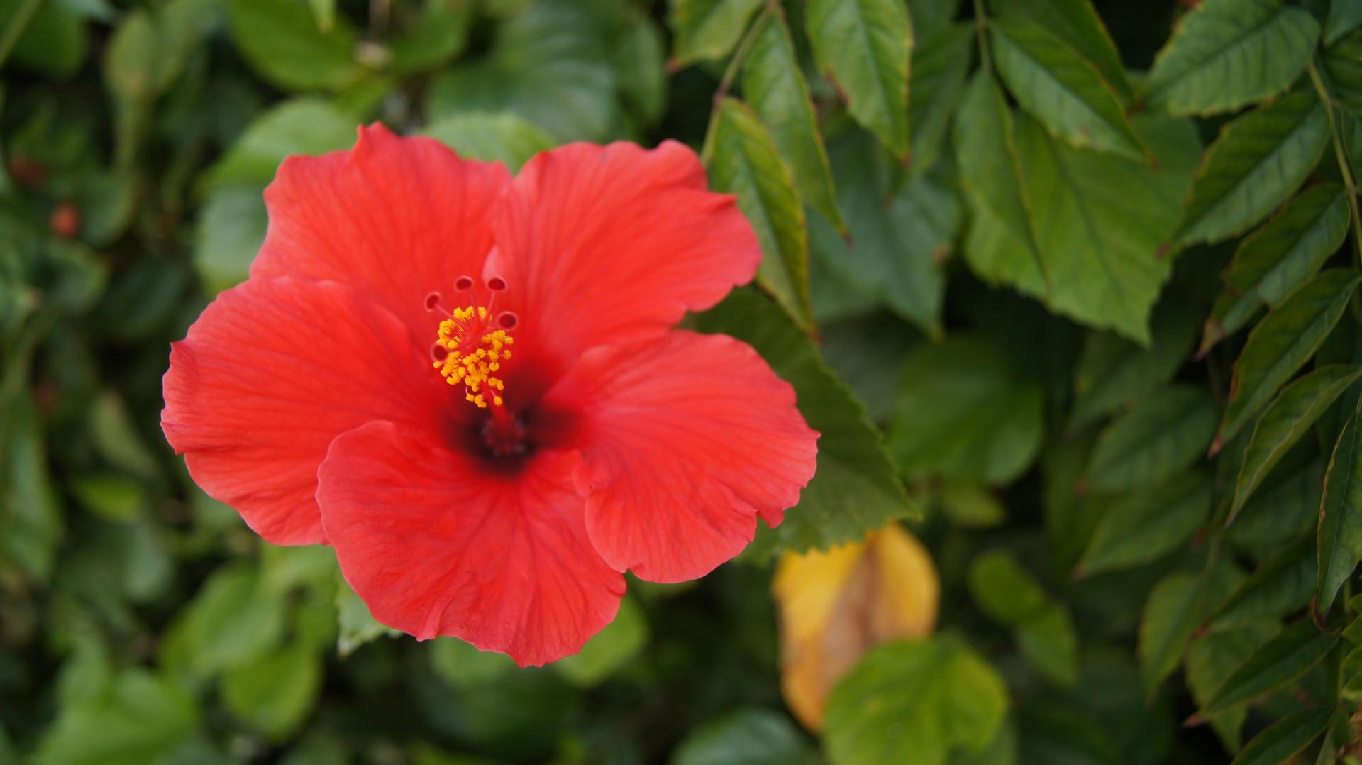 flower-2356773_1920
