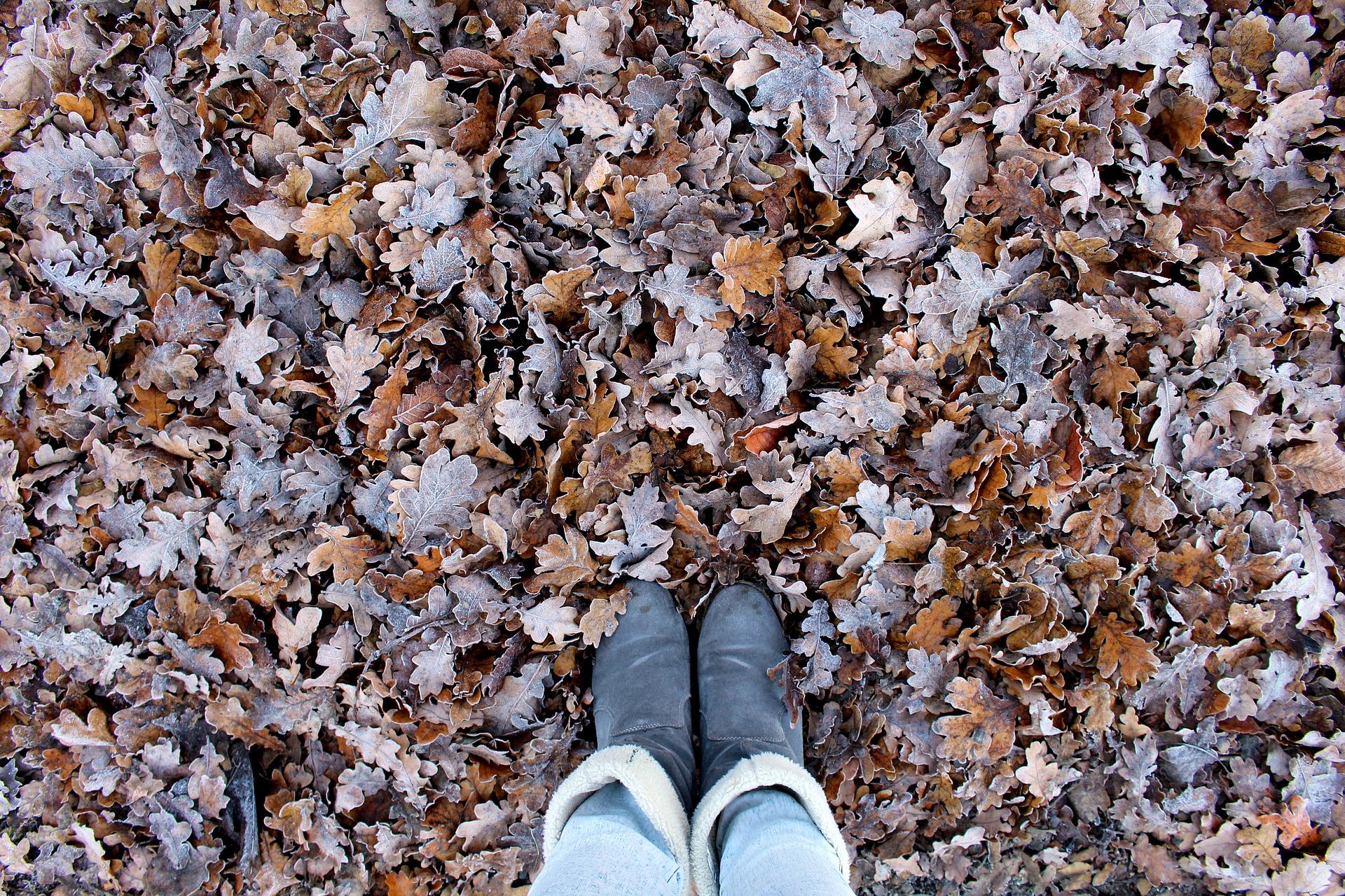 autumn-1909009_1920